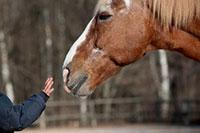 Pferdetraining Lingen